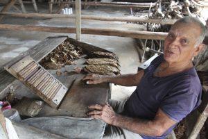 Cuban Cigar Rolling Demo