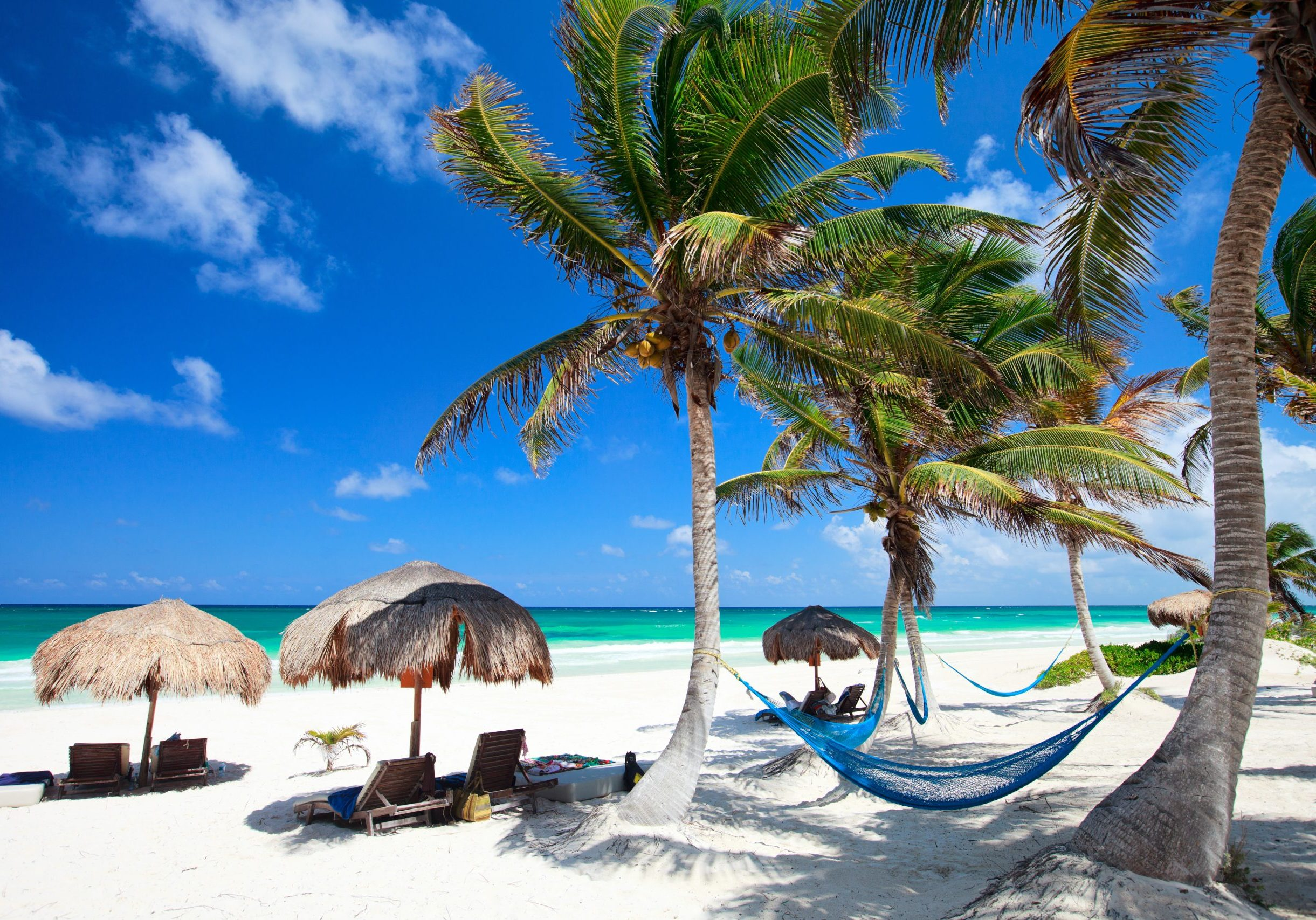 beachfront image with palm trees and hammock